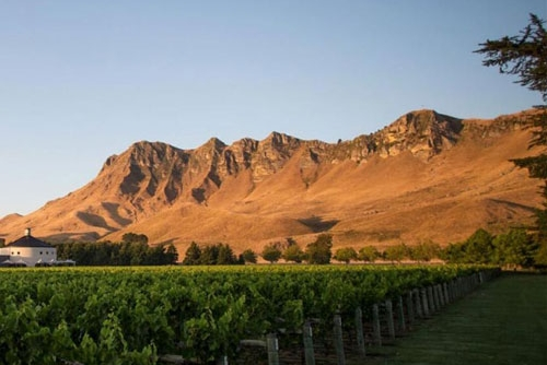 Craggy Range Vineyard Ltd