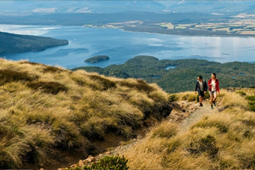Discover the South Island