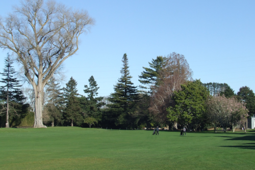 Napier Golf Club